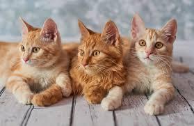 Наши коты и кошки