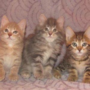 Котята от 01.03.2020